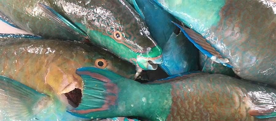colourful fiji fish