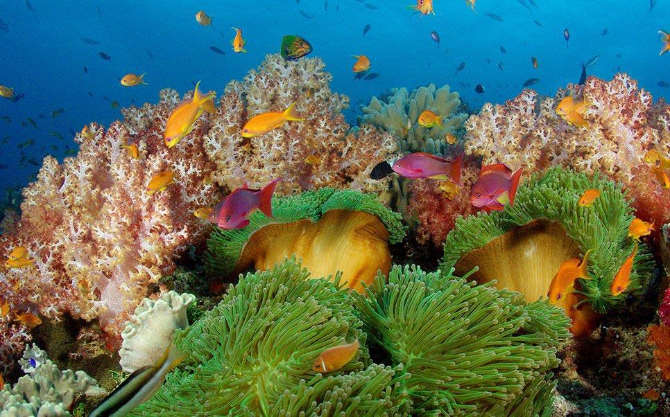 sea floor fiji
