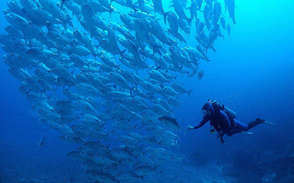 scuba diver in the Beqa Lagoon